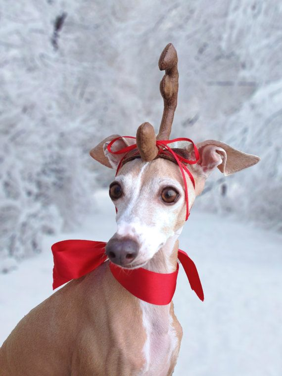 Max The Grinch Dog Head Antler For Christmas Pets Dog Or By Olipra
