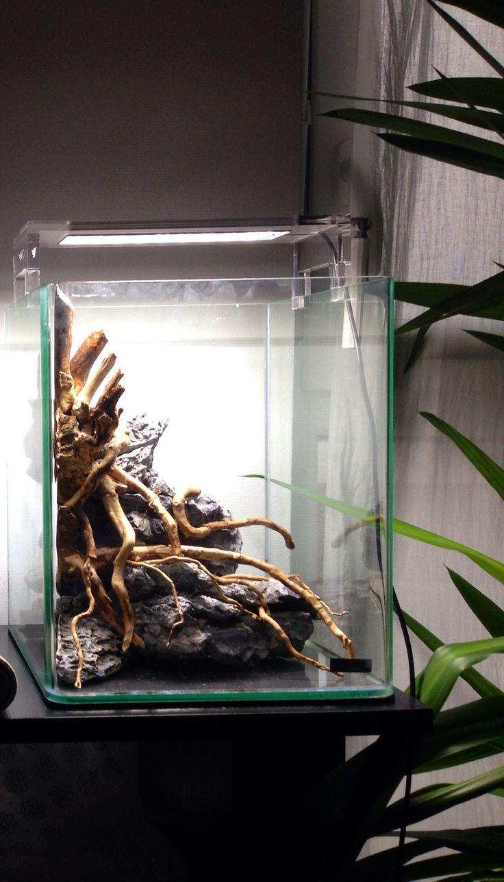 nano cube 20l en projet akwarium pinterest aquarium. Black Bedroom Furniture Sets. Home Design Ideas