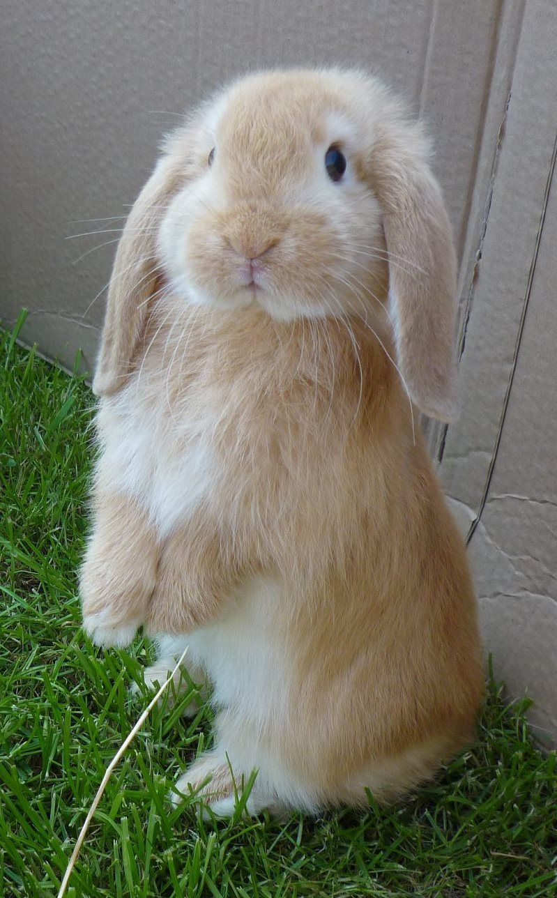i love it when peanut sits up like this bunny to get attention