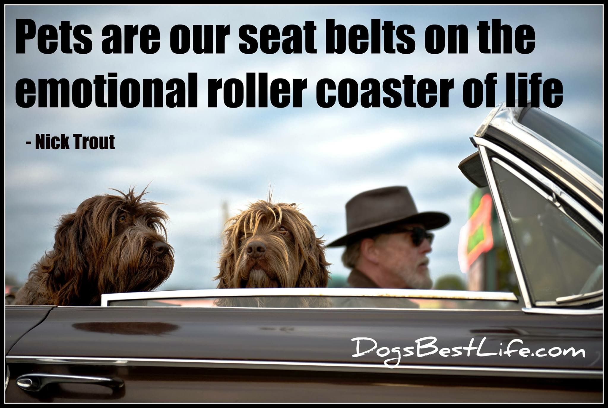 Life is good with dogs. Pet travel, Dog car, Dog care tips