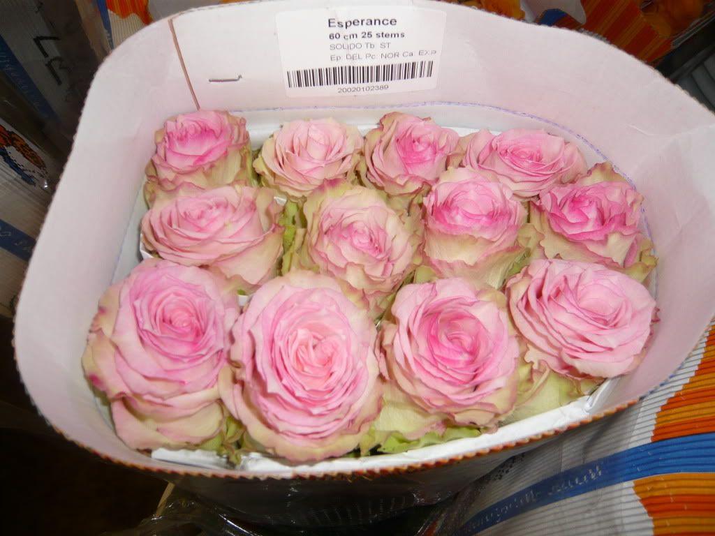 esperance rose flower id for my clients pinterest rose