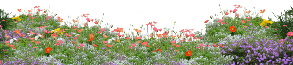 Poppies png by Kibblywibbly on DeviantArt Plants, Dream