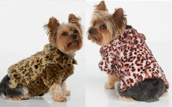 Six Suggestions For Keeping Your #Dog Warm and Healthy This Winter - http://petmoz.org/six-suggestions-for-keeping-your-dog-warm-and-healthy-this-winter/
