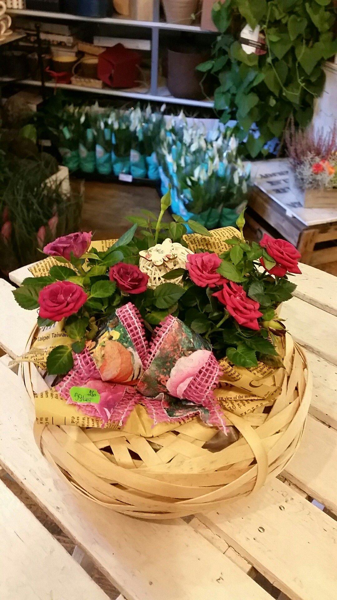 Pin by gaby dinca on flori pinterest