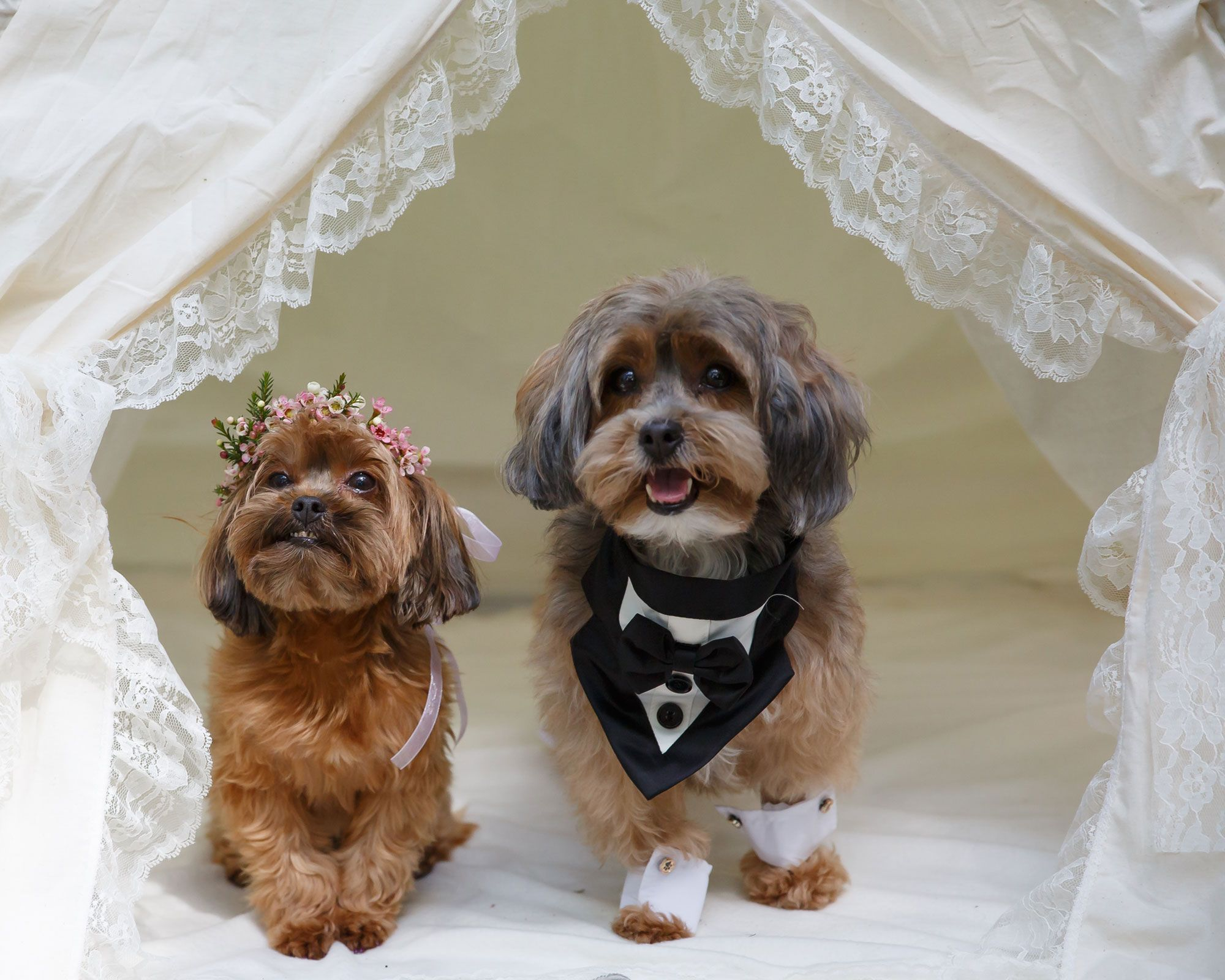 Coco & Truffles A Puppy Love Story
