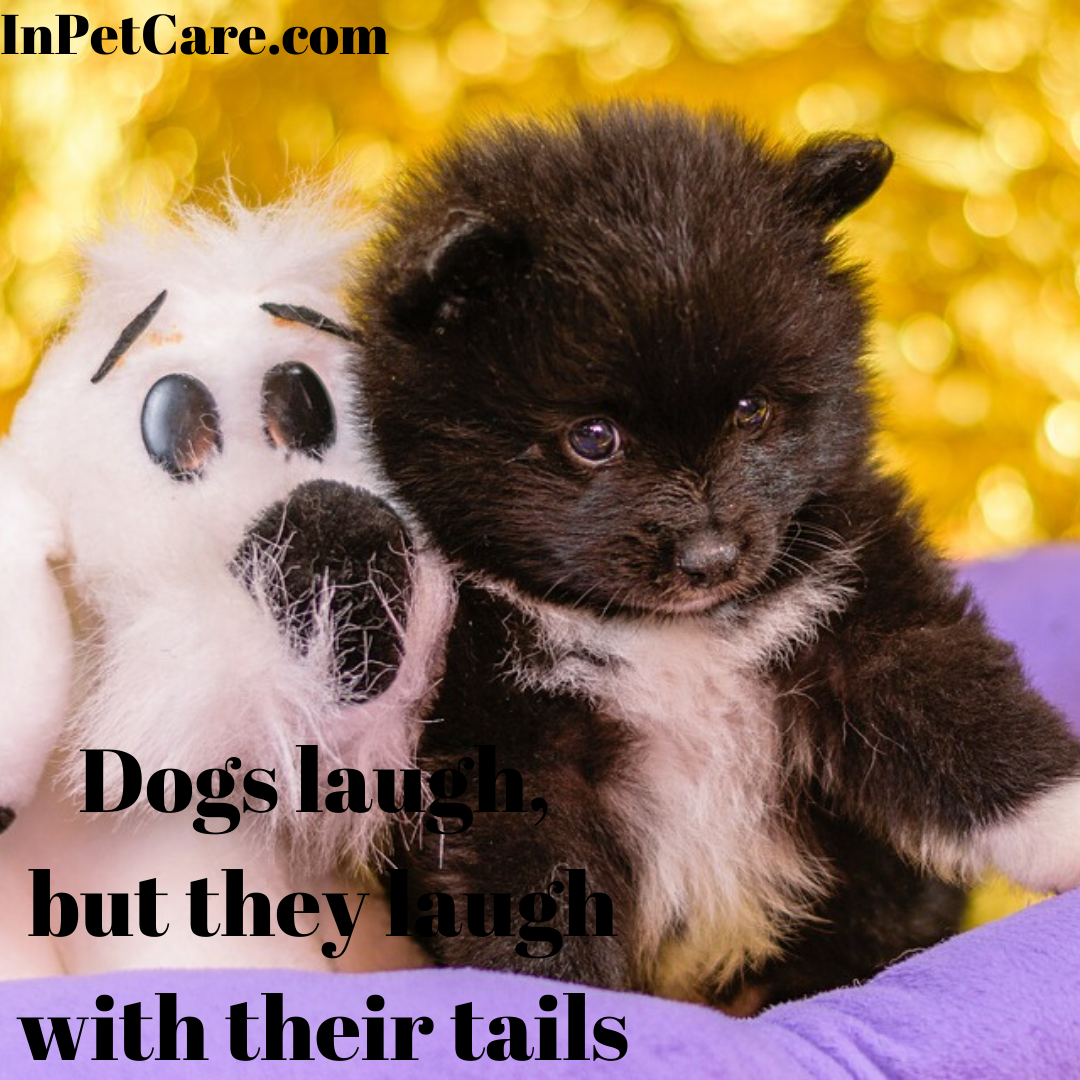 Dog Laugh But They Laugh With Their Tails Tags Dog Care Dog Care Near Me Dog Daycare Portland Dog Car Cute Dogs Images Cute Cats And Dogs Cute Names For Dogs
