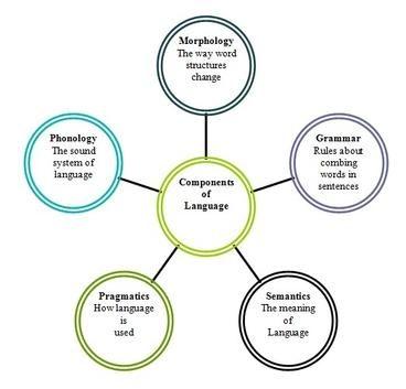 Penjelasan macam macam dan contoh komponen bahasa dalam bahasa penjelasan macam macam dan contoh komponen bahasa dalam bahasa inggris ccuart Choice Image