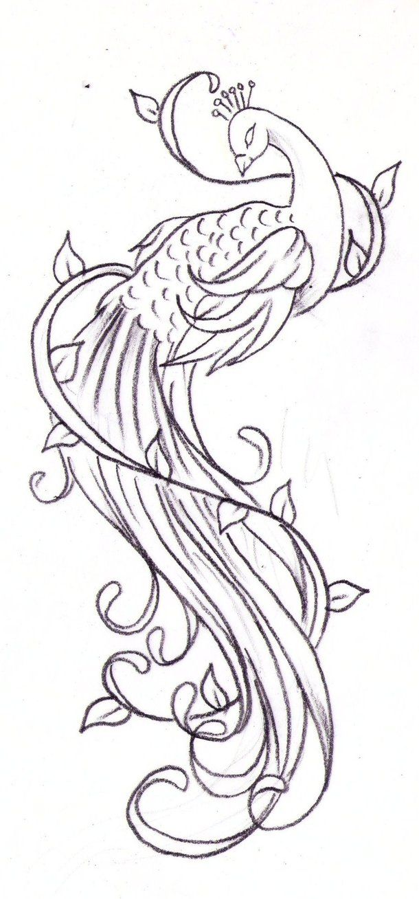 peacock tattoo sketch by *Nevermore-Ink on deviantART | Tattoos ...