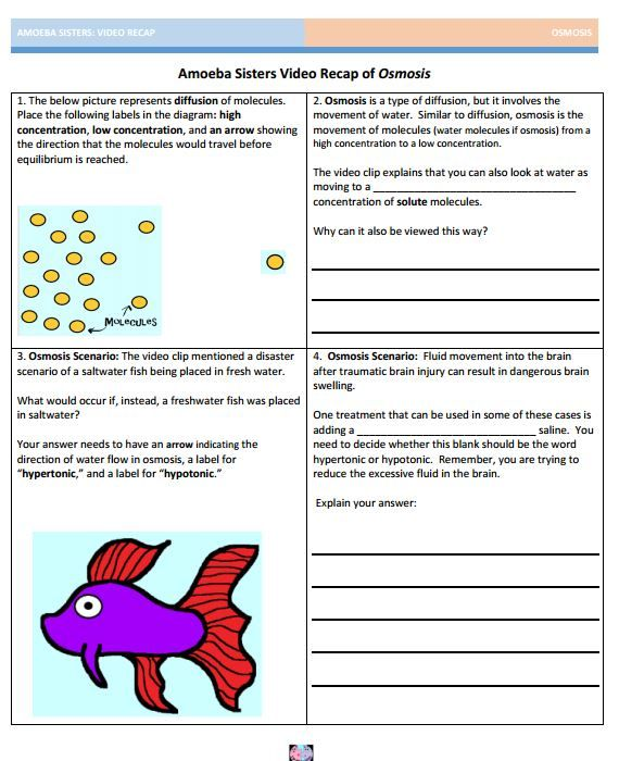 Osmosis handout made by the Amoeba Sisters Click to visit website – Osmosis Worksheet Answer Key