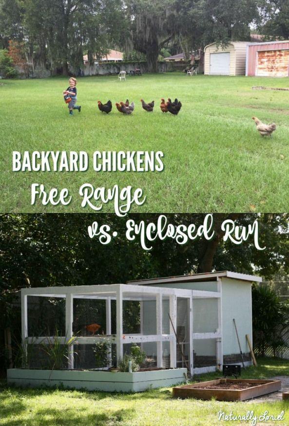 Backyard Chickens: Free Range vs. Enclosed Run # ...