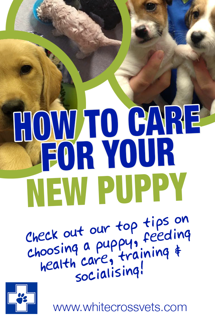 How to care for your new puppy Socializing dogs, Pet