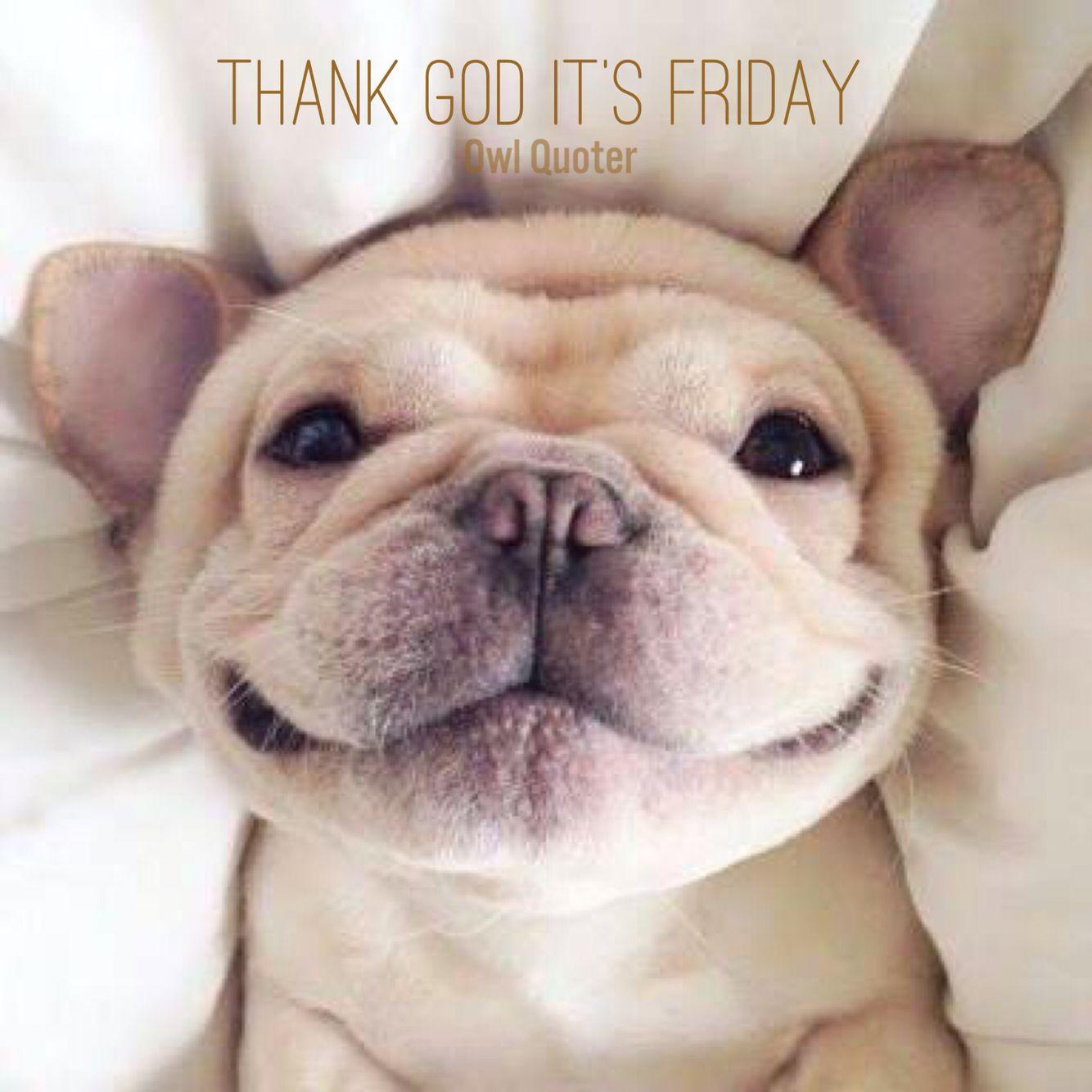 Thank god it's Friday #owlquoter #tgif