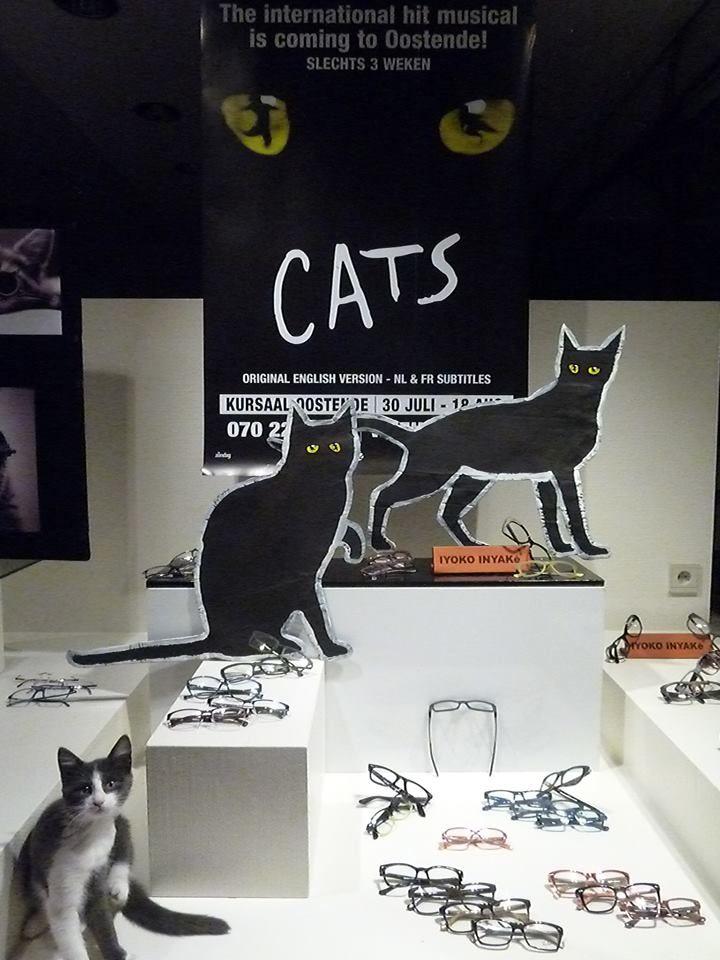 etalage Cats ! (Inclusief onze kleine Jenny)