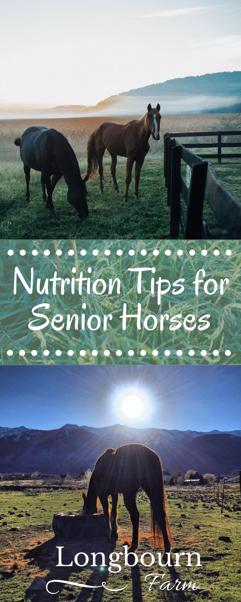 Nutrition Tips for Senior Horses Horses, Horse care