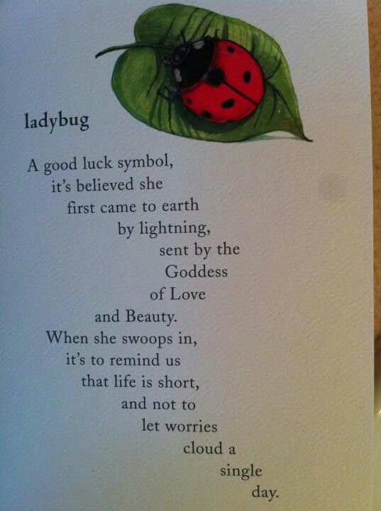 Ladybug A Good Luck Symbol Its Believed She First Came To Earth