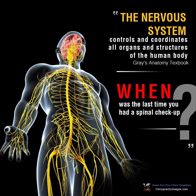 The Nervous System Controls And Coordinates All Organs And