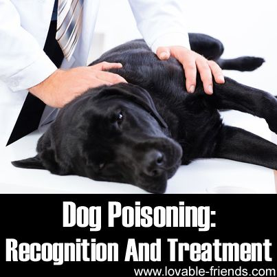 Dog Poisoning Recognition And Treatment Animal Info Pinterest