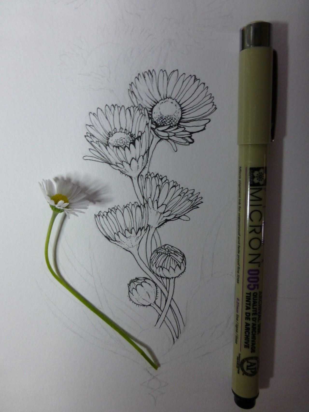 Pin by olivia on zentangle pinterest drawings plant