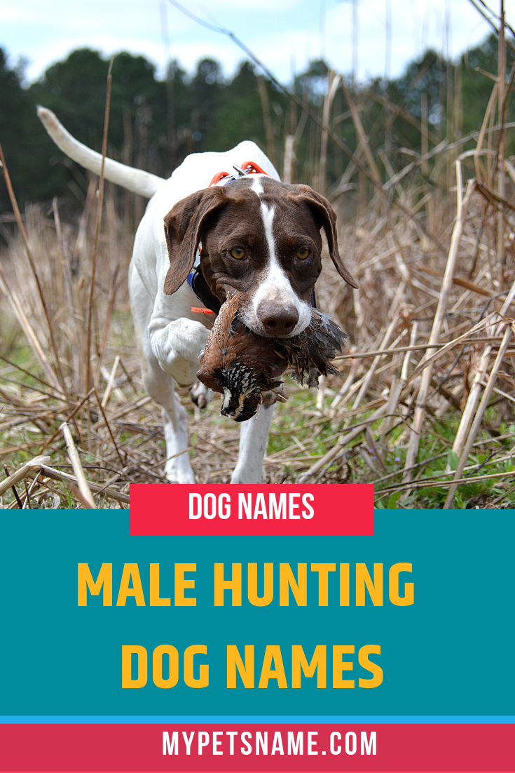 We Know They Are Many Hunting Dog Breeds And Sizes From Smaller