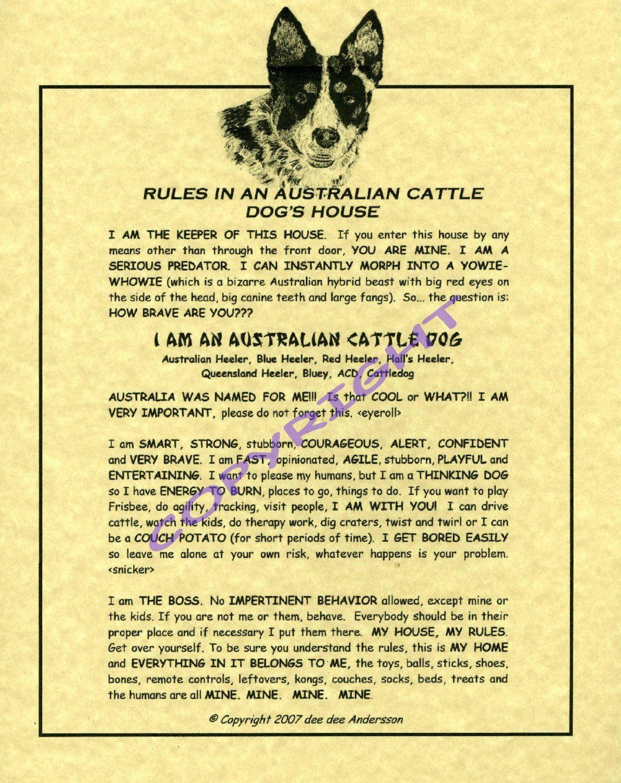 Australian Cattle Dog Rules. Blue Heeler