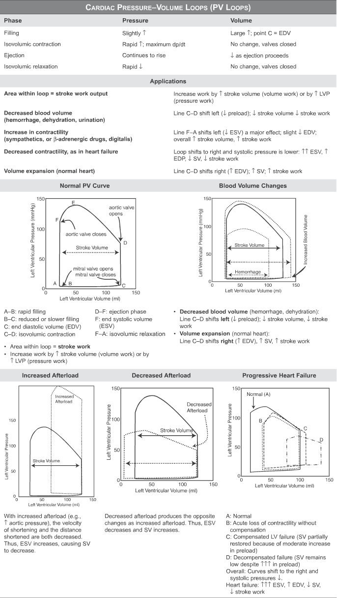 hight resolution of pressure volume loops and cardiac cycle