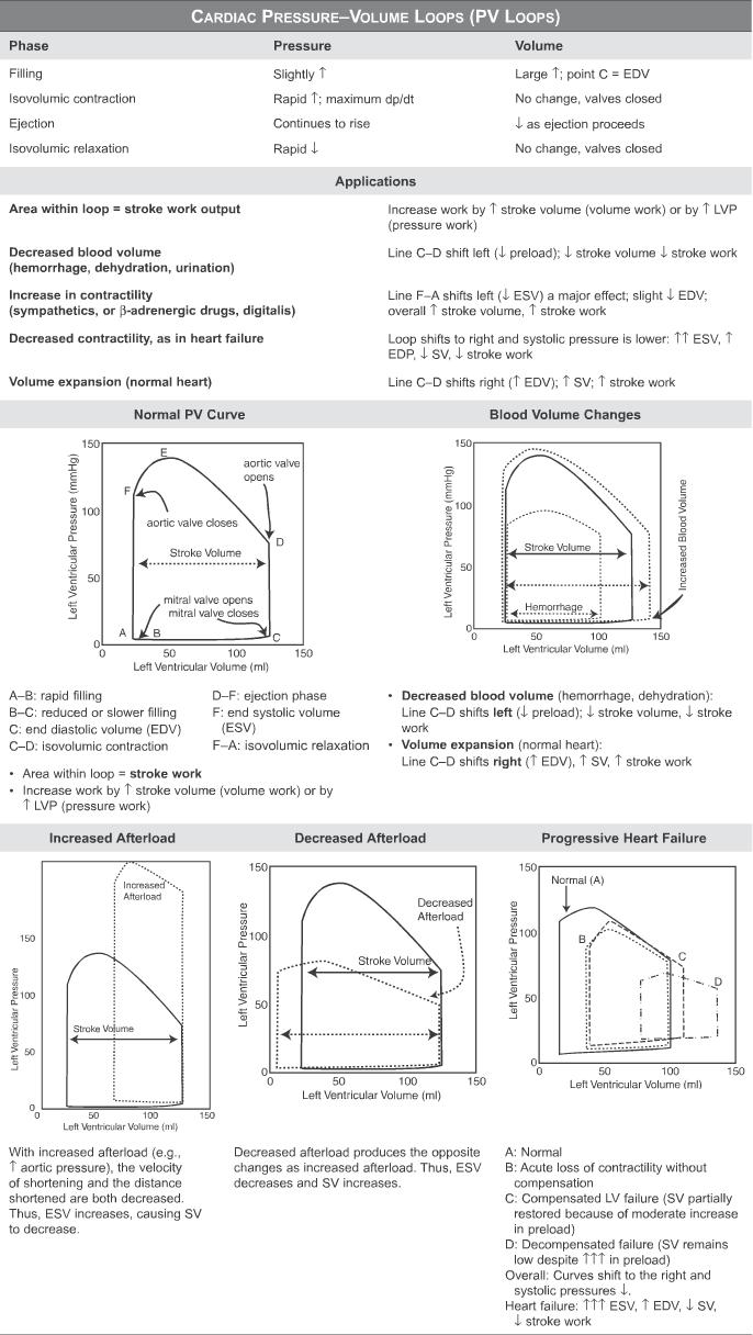medium resolution of pressure volume loops and cardiac cycle