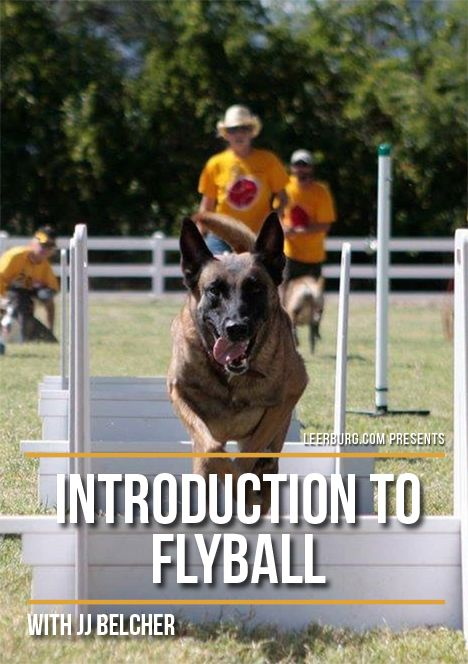 Introduction To Flyball With Jj Belcher Dog Training Dog