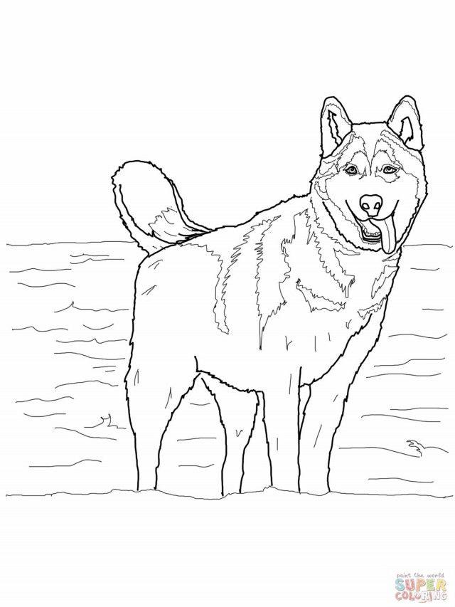 printable Siberian Husky coloring page | Free coloring