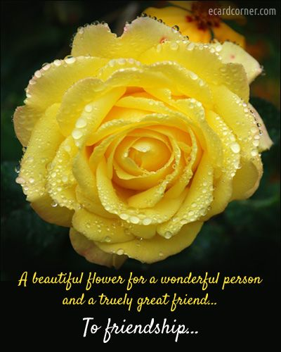 Beautiful Rose For Your Friend On Friendship Day Inspiration