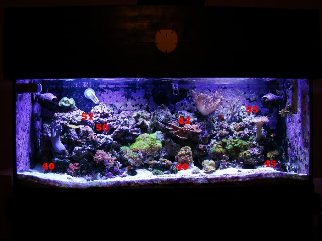freshwater aquariums | Freshwater Aquarium Light to download Freshwater Aquarium Light just ...