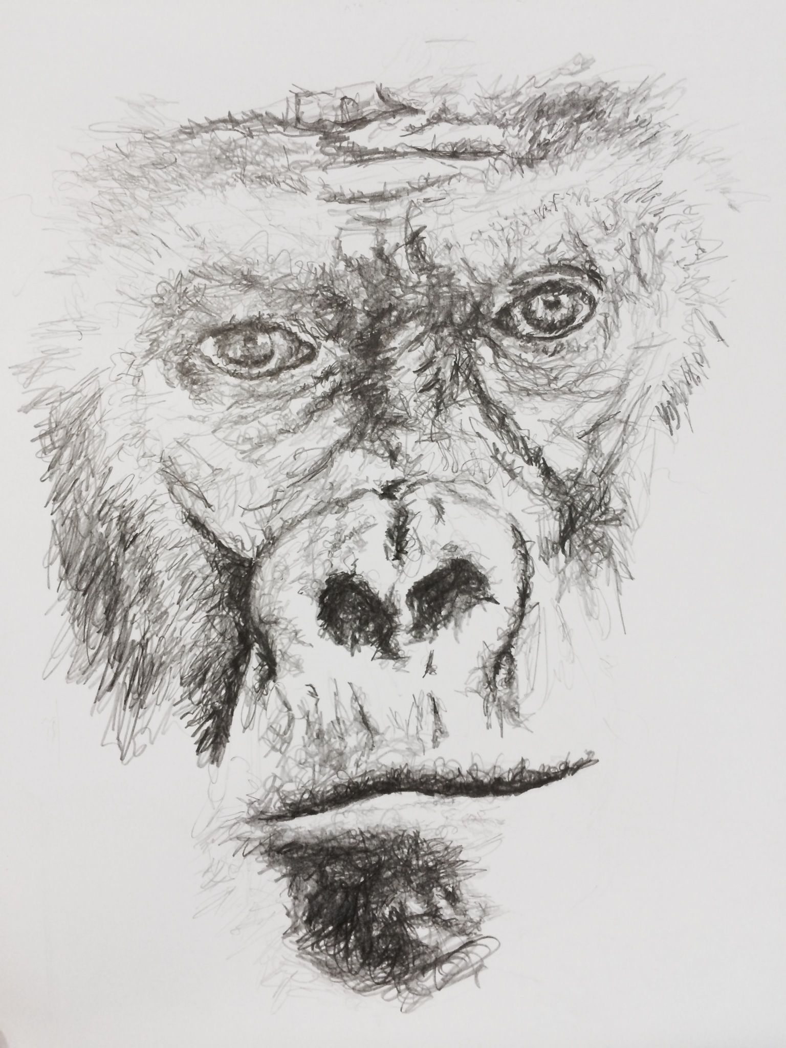 It is an image of Versatile Drawing Of A Gorilla