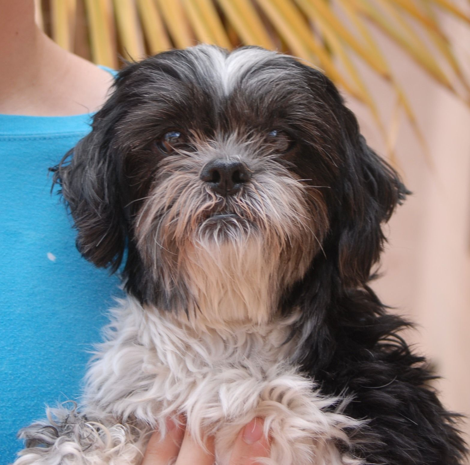 Frederick is a kind sweetheart debuting for adoption today
