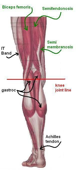 Knee pain it seems like those words are as common in the running anatomy ccuart Choice Image
