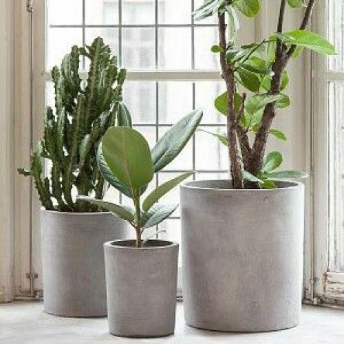 Plantenpot beton house doctor plants pinterest for Grote planten voor binnen