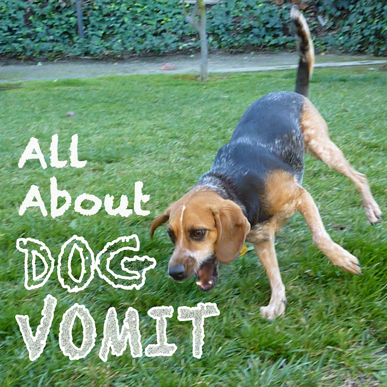 Dog Ate Some Rug: All About Dog Vomit: Why Is My Dog Throwing Up?