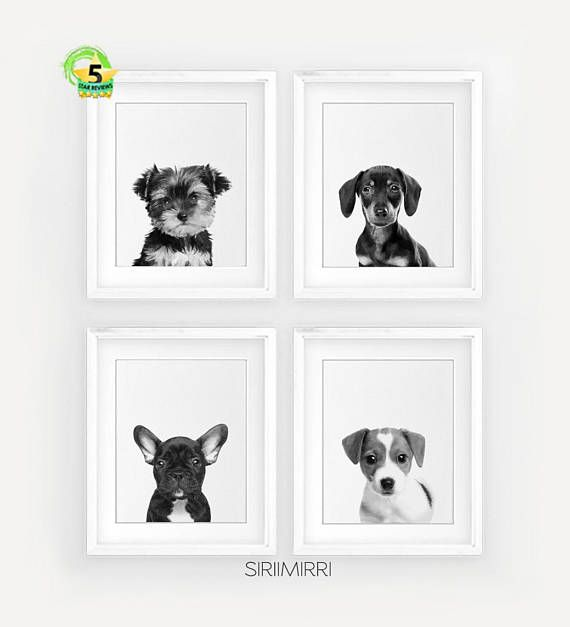Black and white dog wall art set of 3 prints dog lover print set pet puppies dog art print french bulldog dachshund yorkshire jack russel white dogs and