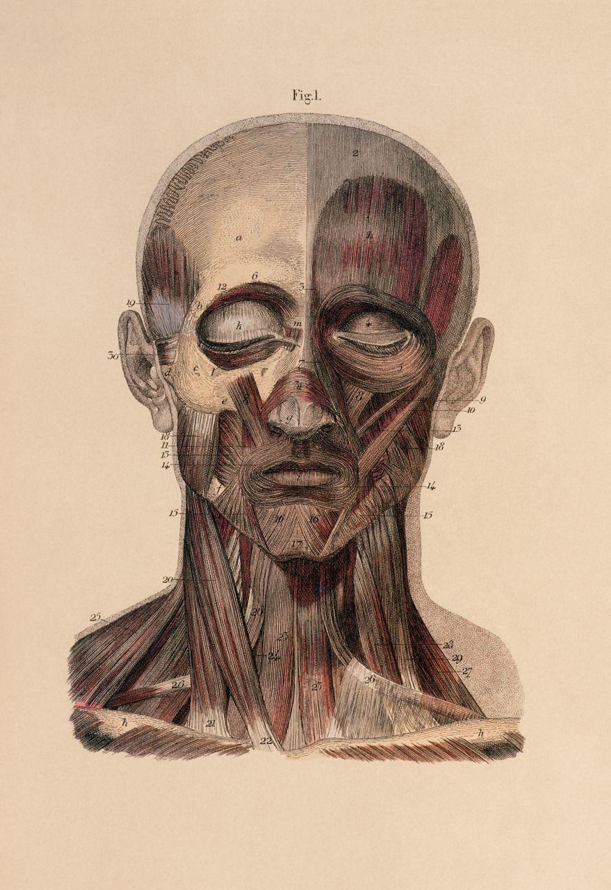 24 photo of 40 for human head anatomy drawing | 我 ich | Pinterest ...