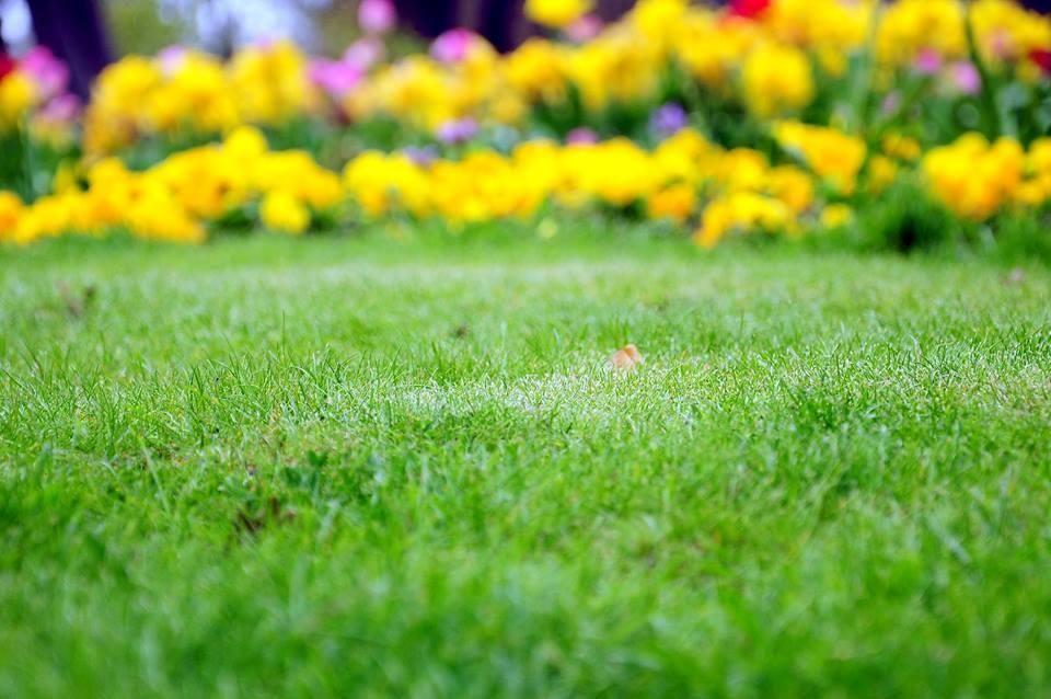 Pin on Gardening Inspo