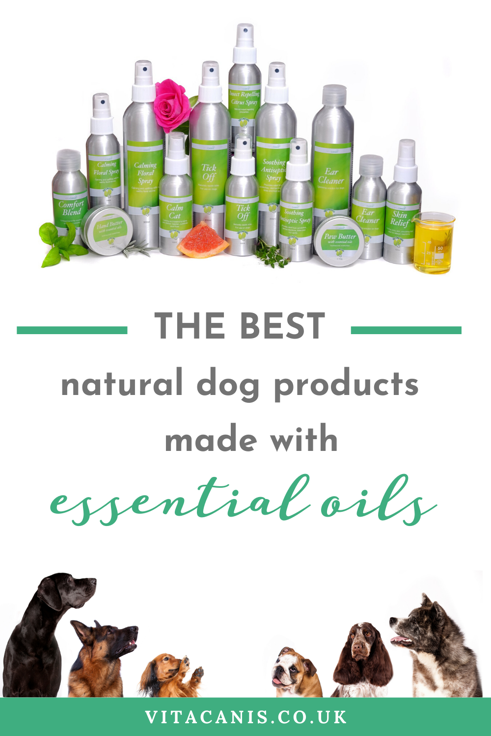 Must Have Dog Products for Any Breed Of Dog Wondering