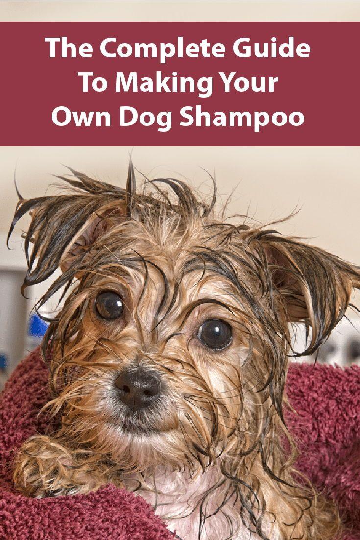 15 homemade dog shampoo recipes dog shampoo pet shampoo