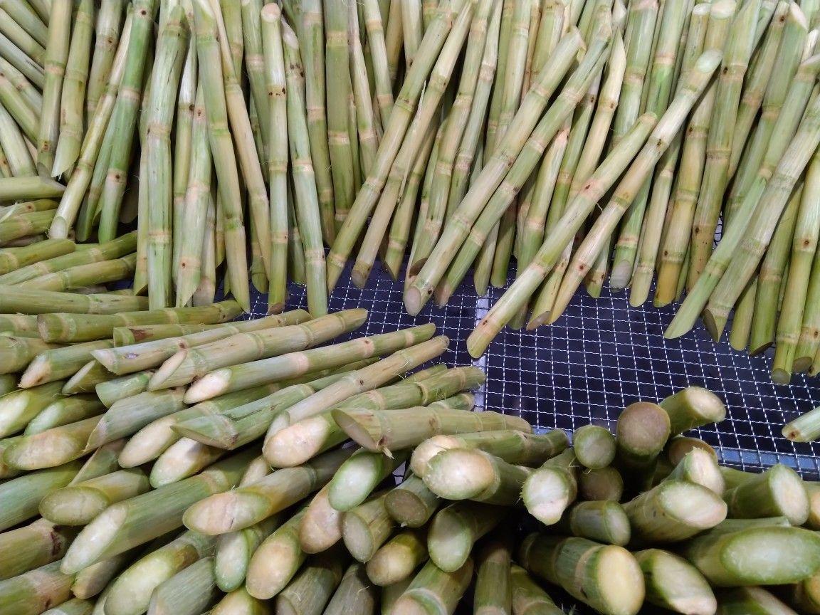 33+ Where can i buy sugar cane stalks near me ideas