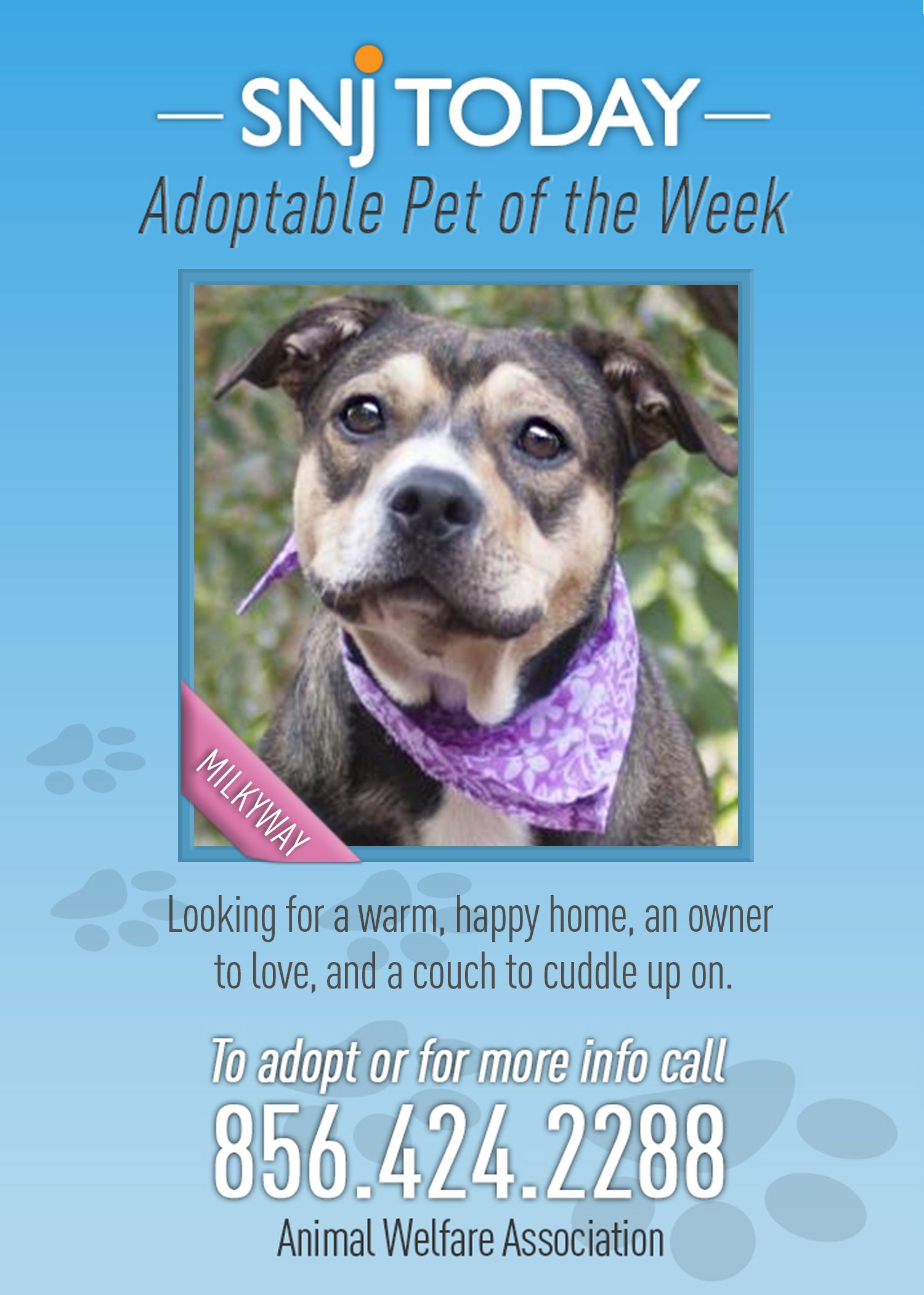 Milkyway Is Snj S Adoptable Pet This 3 Year Old Terrier Beagle Knows Her Commands And Loves To Play If You D L Animal Welfare No Kill Animal Shelter Welfare