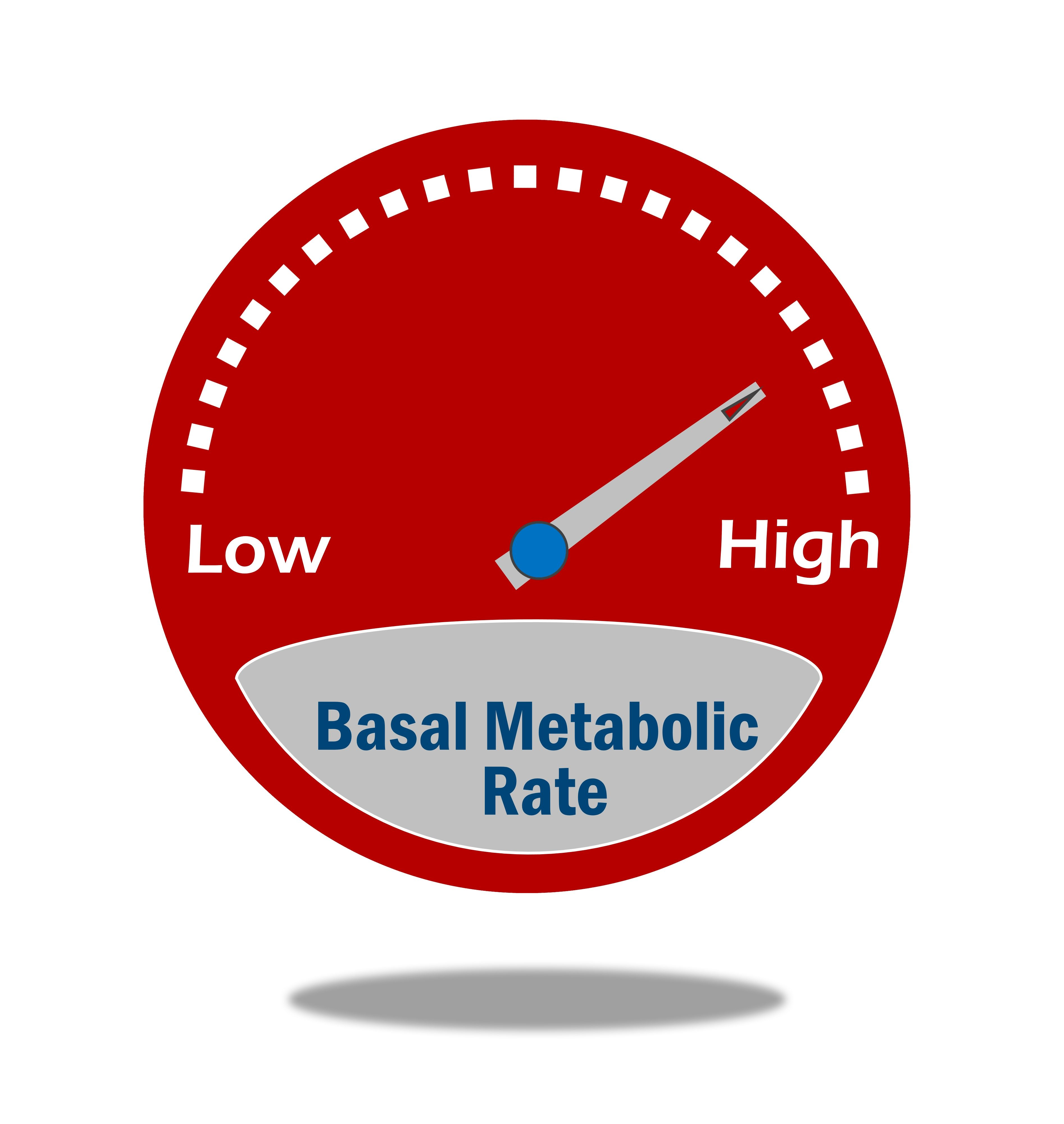 How To Use Basal Metabolic Rate