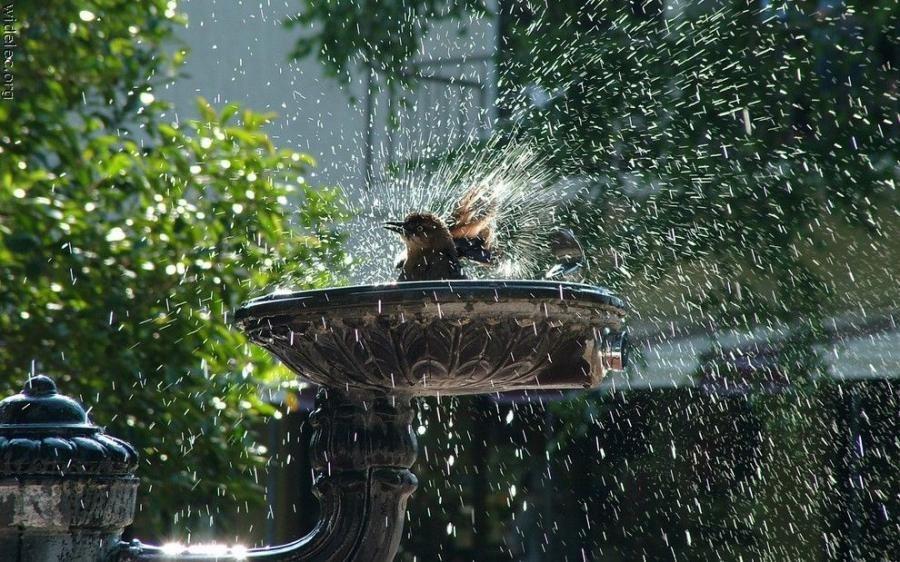 bird+bath.jpg (900×562)