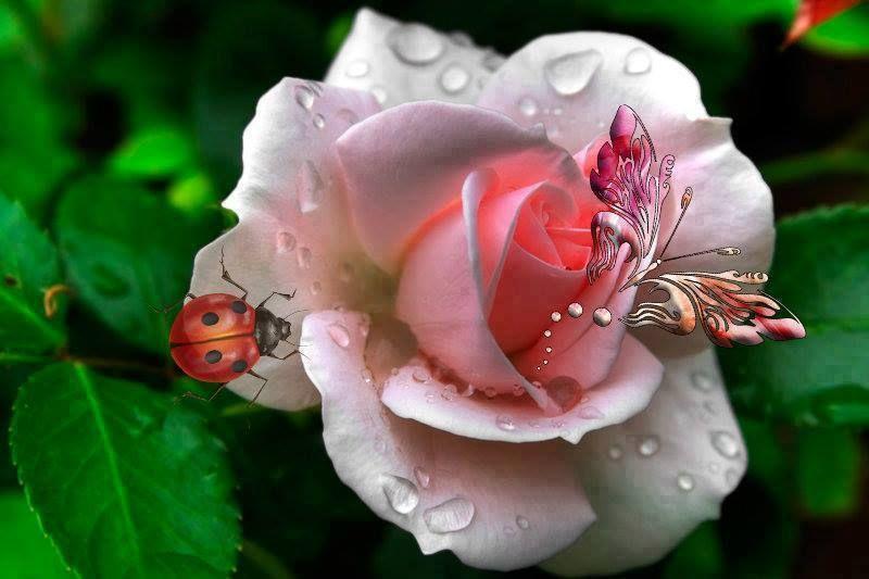 Como vivir un Gran Amor http://www.yoespiritual.com/cursos-y-conferencias/como-vivir-un-gran-amor.html