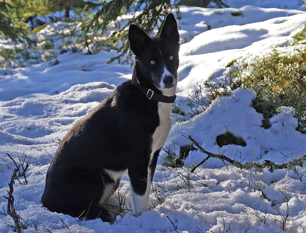 Winter Camping With Your Dog | Winter camping, Dogs, Pet ...