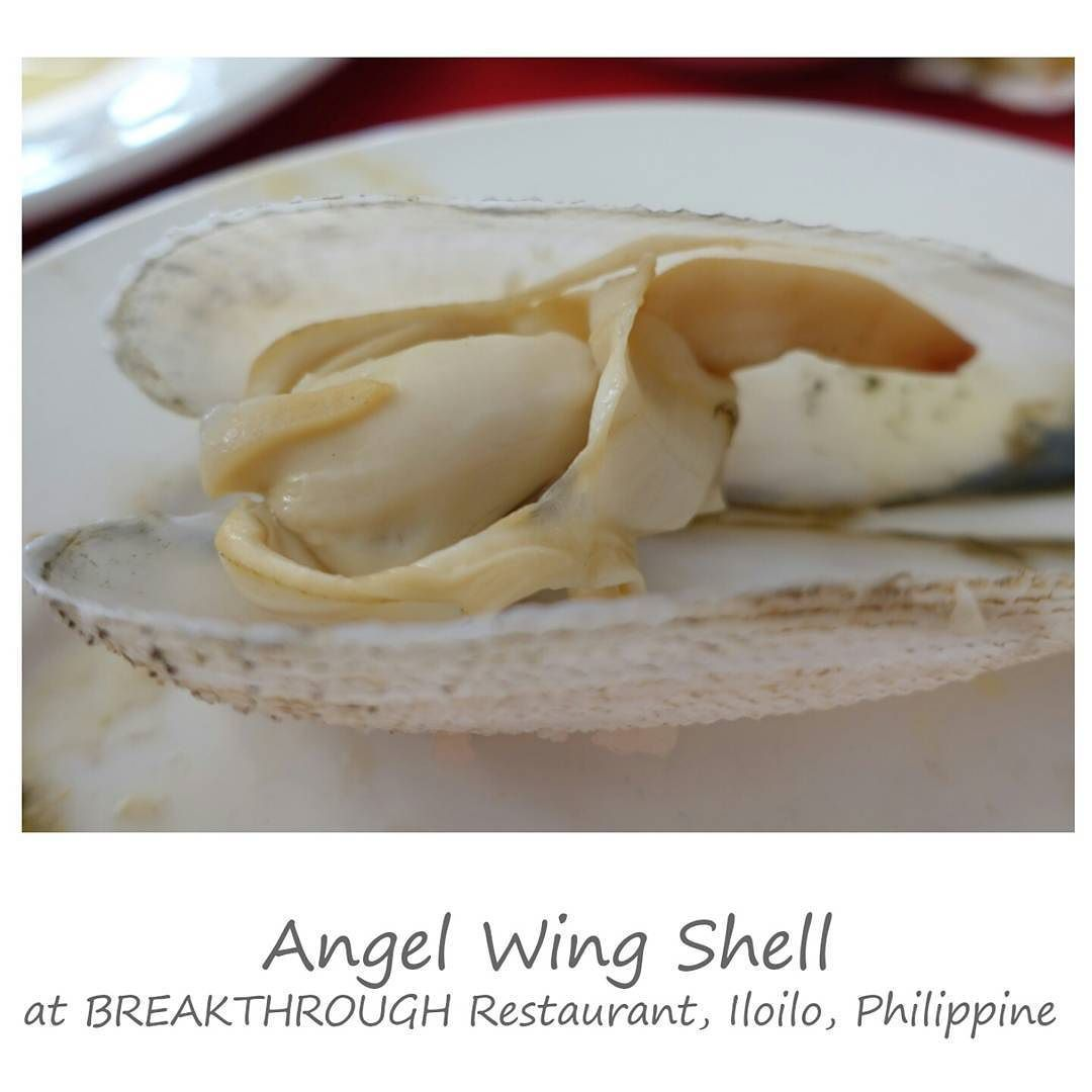 Angel Wing Shell at BREAKTHROUGH Seafood Restaurant Iloilo. The shape of this shell looks exactly as a closing wings. This is my first time see and ate this kind of shell. It is only found at this area and most exported to Japan. ( Very famous at Japan market). It tastes sweet and very delicious. Iloilo Philippine. by ssfoodtravel
