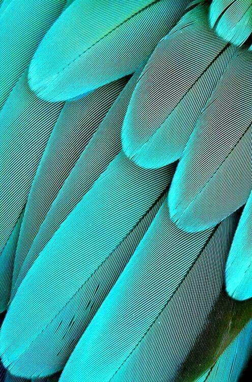 Türkis Farbe Mischen : pin von olga titova auf federn farbe blau und t rkis blau ~ A.2002-acura-tl-radio.info Haus und Dekorationen