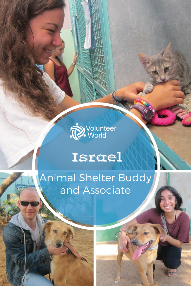 Take Your Chance Now And Become A Volunteer In Israel Animal Shelter Volunteer Volunteer Travel