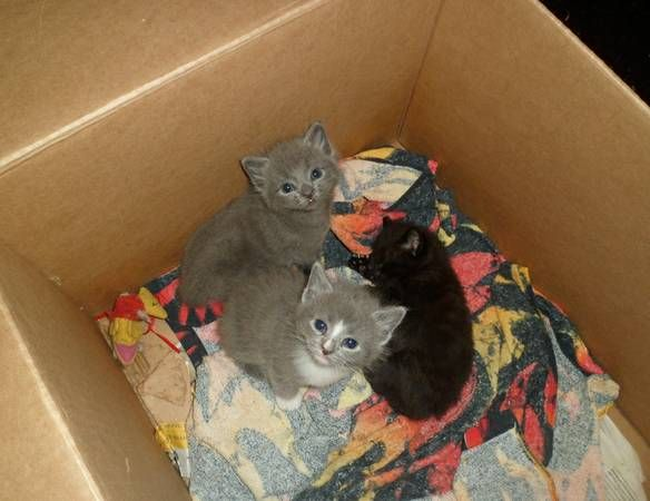 Cranston Ri 3 Free Kittens 3 Kittens That Will Be Ready To Go To